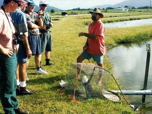 Redclaw crayfish farm visit